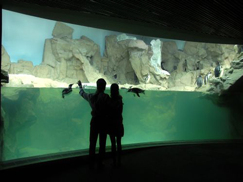 The Four Sections of Cattolicas Aquarium