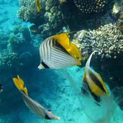 Wasserpark Aquarium von Cattolica