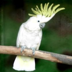 Eden Park – Eine faunistische Oase für Vögel in Torre Pedrera